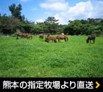 熊本の指定牧場より直送